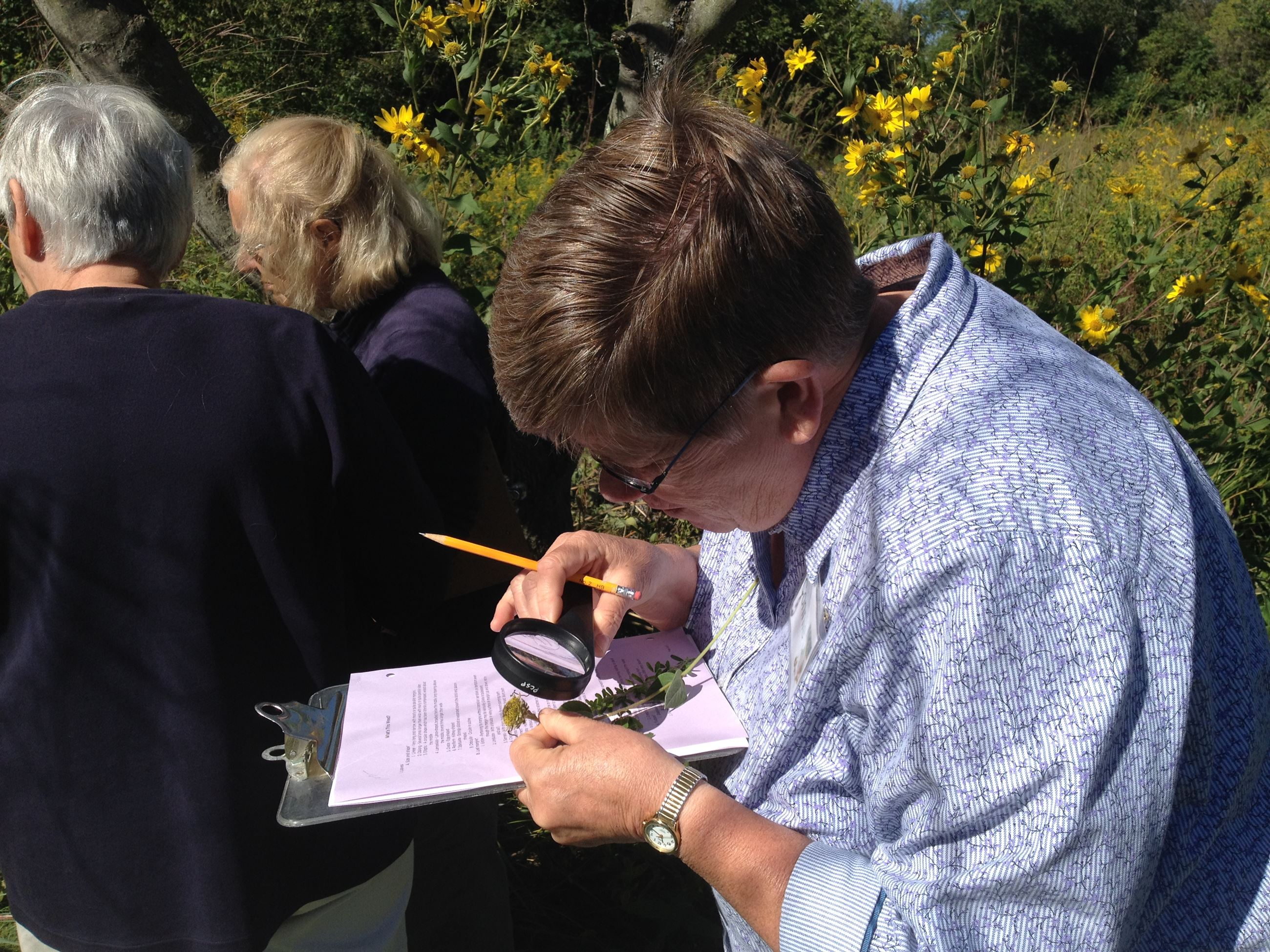 investigating plants at a master naturalist class