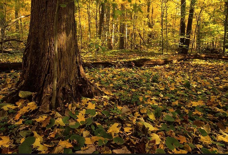 Indian Summer at Bendix Woods County Park photo by Cliff Zenor